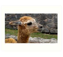 Llama Profile in Guano Ecuador Art Print
