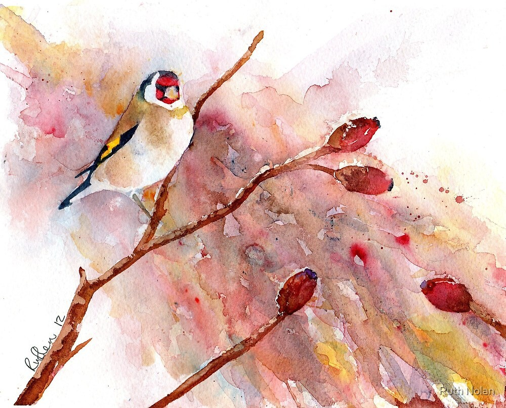 Water colour Goldfinch by Ruth Nolan
