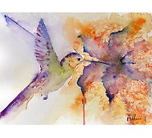 Purple Hummingbird Photographic Print