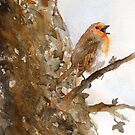 Singing Robin by Ruth Nolan