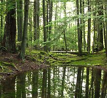 Forest Pond Reflections by Tanya Shockman