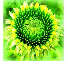 Perfect symmetry Photographic Print