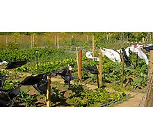 The allotments in July  Photographic Print