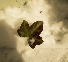 A Leaf in the Clouds by AlexTorres