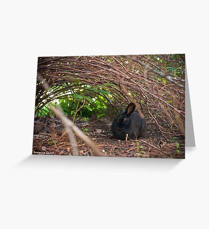 stray rabbit under the bush Greeting Card