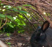 stray rabbit under the bush Sticker