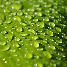 Rain Drops by scottmarla