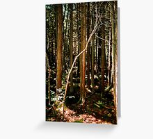 A Forest of Mystery Greeting Card