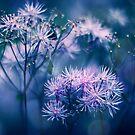 Blue Wilderness by Photofreaks