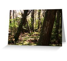 The crooked Forest Greeting Card