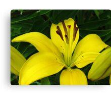 Gorgeous Lemon Lily Macro Canvas Print