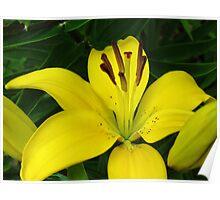 Gorgeous Lemon Lily Macro Poster