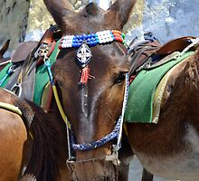 Peaking Donkey by MoniqueFlynn
