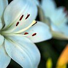 White Flower by David Shayani