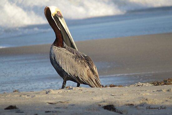 Oceanside Portrait of a Pelican by SummerJade