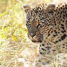 Leopard by Mandy Fell