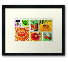 Highlights of the day... Framed Print