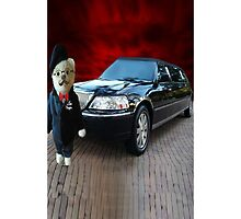 Teddy Bear Limousine Chauffeur Iphone Case by ✿✿ Bonita ✿✿ ђєℓℓσ