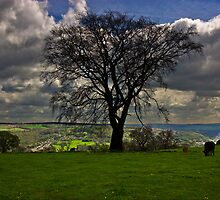 Tree by rolandkeates