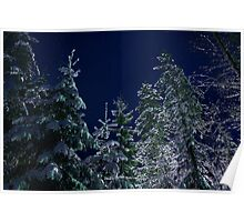 Snowy Trees and Night Sky Poster