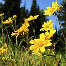 Alpine Wildflowers by David Kocherhans