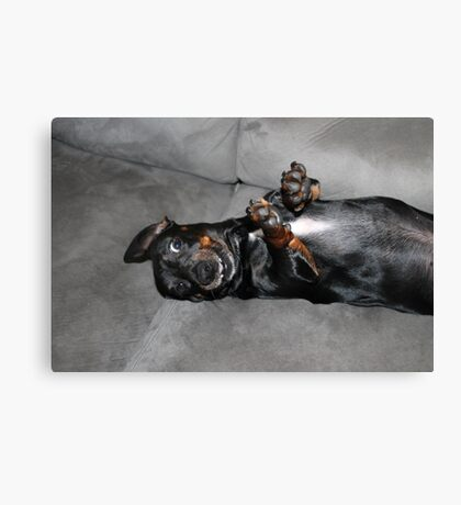 Goofy Doxie Canvas Print