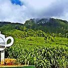 Zen & A Teacup (please see description) by Kanages Ramesh