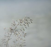 Whisper in the Wind by Annie Lemay  Photography