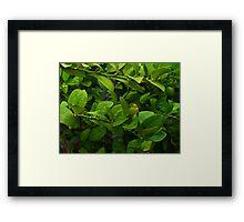 ©GS The Lemon Tree Framed Print