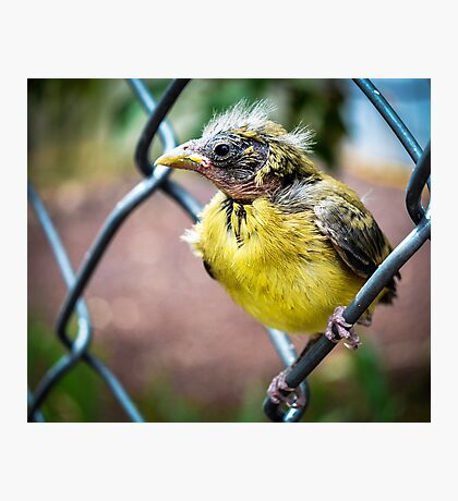 Baby Finch Photographic Print