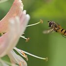 Hover by SylviaHardy
