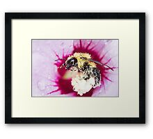 Collecting Pollen. Framed Print