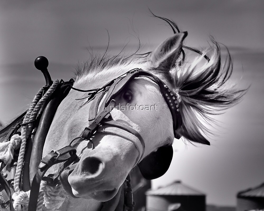 Draft horse at work by pdsfotoart