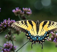 Swallowtail in the Garden by Dawn Crouse