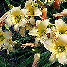Luscious Lilies by Monnie Ryan