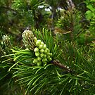 Pine Tree Detail by MaryinMaine