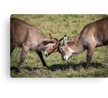Antelope Games Canvas Print