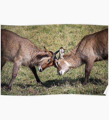 Antelope Games Poster
