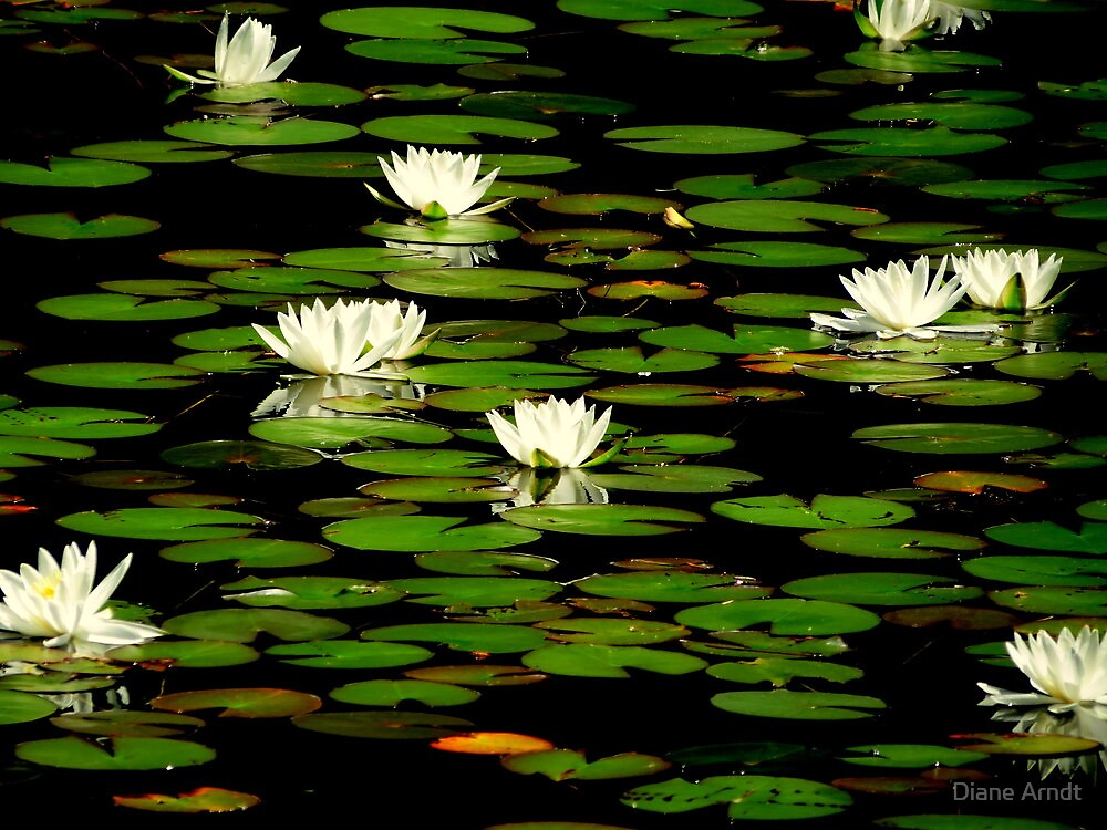 The Lily Pond...Waldport, Oregon by Diane Arndt