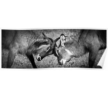 Antelope Games black and white Poster