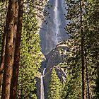 Yosemite Falls, California, USA by TonyCrehan