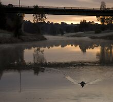 The Duck on a cold frosty August Morning on the Yass River New South Wales Australia by Graeme Rouillon