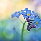 Forget Me... Not. by Paul-M-W