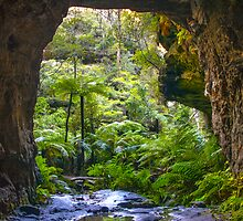 Glow worm tunnel Lithgow by Doug Cliff