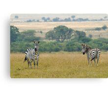 Plains zebras Canvas Print