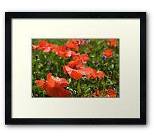 Poppies Compton Berkshire  Framed Print