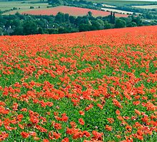 Fields of Poppies Compton Berkshire Compton Berkshire by Jim Hellier