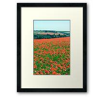 Fields of Poppies Compton Berkshire Compton Berkshire Framed Print