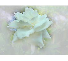 Dream Flower Photographic Print