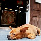 Let Sleeping Dogs Lie by Samsticks